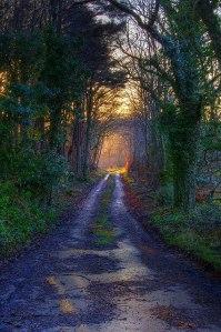beautiful_path