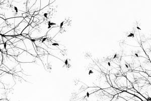 Birds in Trees - Andrew Dai