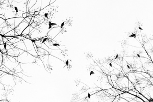 Birds in Trees - Andrew Dai